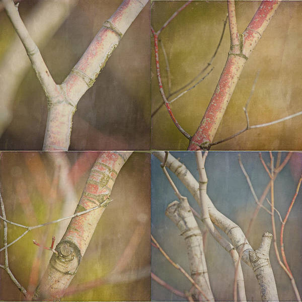 Branches Poster featuring the photograph Branches Times Four by Bonnie Bruno