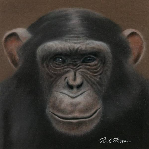 Chimpanzee Poster featuring the painting Chimpanzee by Paul Riesser