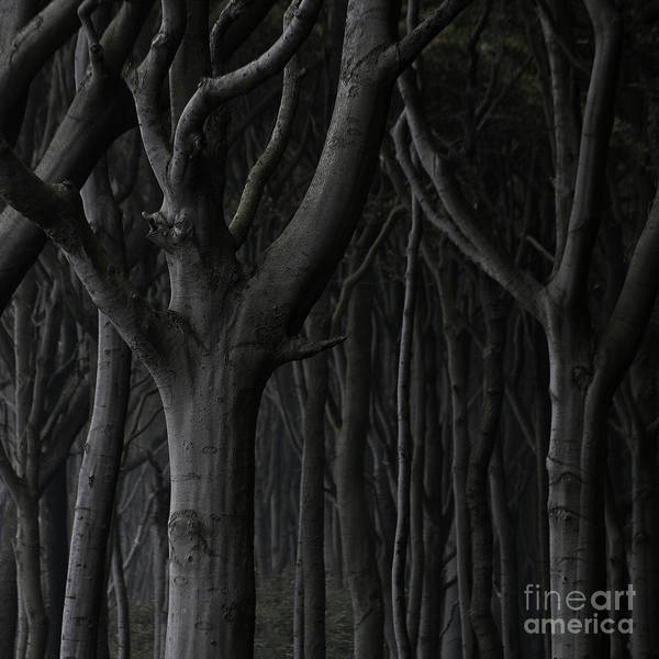 Nature Poster featuring the photograph Dark Forest by Heiko Koehrer-Wagner