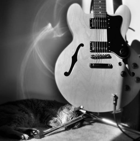 Cat Poster featuring the photograph Epiphone Cat by Kurt Bonnell