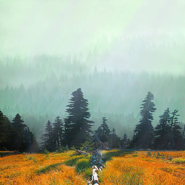 Rain Poster featuring the photograph Fall In The Northwest by Jeff Burgess