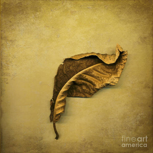 Leaf Poster featuring the digital art First To Fall by Jan Bickerton