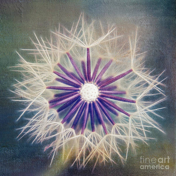 Dandelion Poster featuring the photograph Fluffy Sun - 9bt2a by Variance Collections