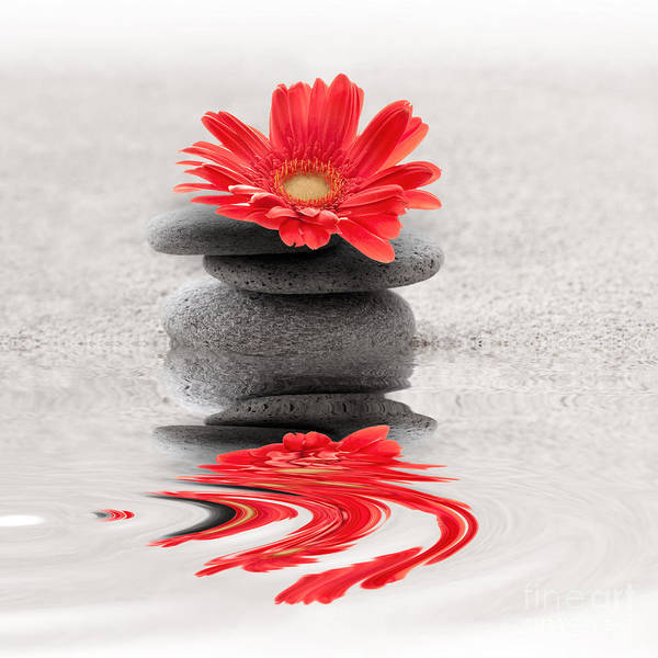 Zen Poster featuring the photograph Gerbera Reflection by Delphimages Photo Creations