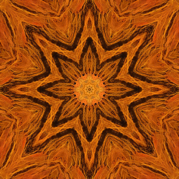Star Poster featuring the photograph Glowing Pine Flower Mandala by Beth Sawickie