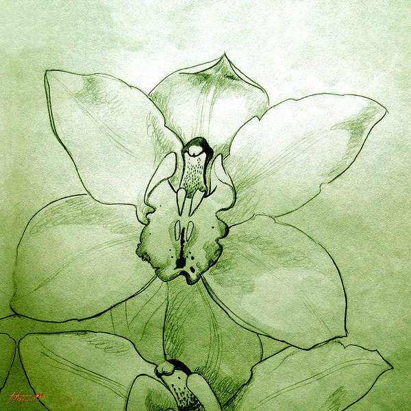 Flower Poster featuring the drawing Green Orchid by Patricia Howitt