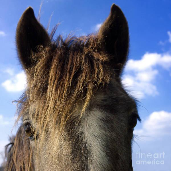 Outdoors Poster featuring the photograph Horse by Bernard Jaubert