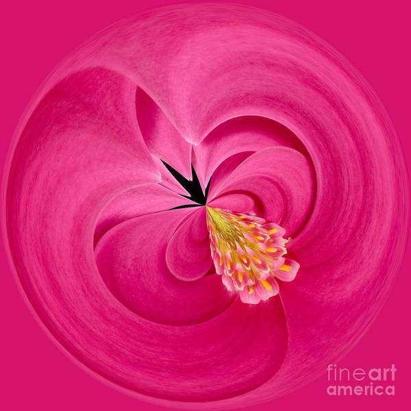 Anne Poster featuring the photograph Hot Pink And Round by Anne Gilbert