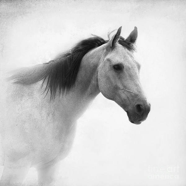 Horse Poster featuring the photograph I Dream Of Horses by Betty LaRue