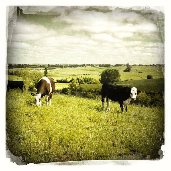 Animals Poster featuring the photograph Livestock by Les Cunliffe