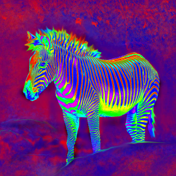 Jane Schnetlage Poster featuring the painting Neon Zebra by Jane Schnetlage