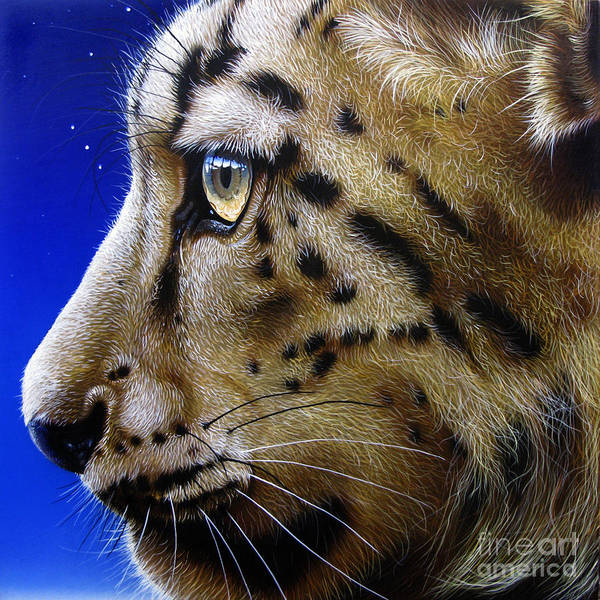 Snow Leopard Poster featuring the painting Nina The Snow Leopard by Jurek Zamoyski