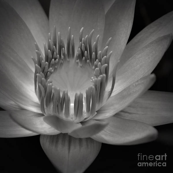 Aloha Poster featuring the photograph Om Mani Padme Hum Hail To The Jewel In The Lotus by Sharon Mau