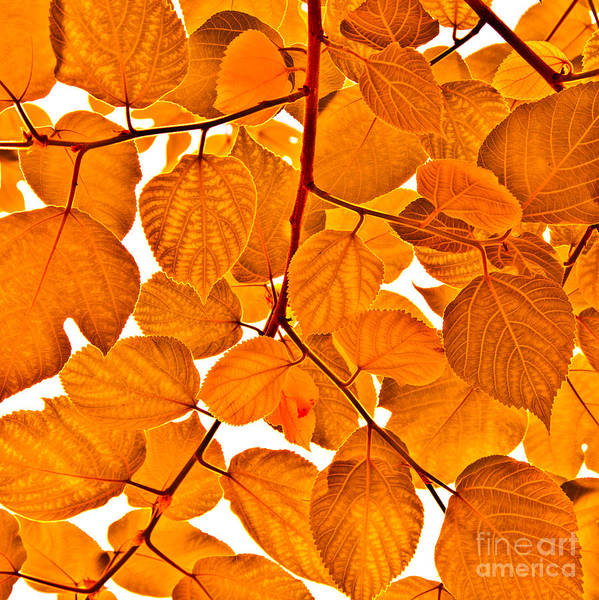 Orange Poster featuring the photograph Orange Leaves by Kathleen Smith