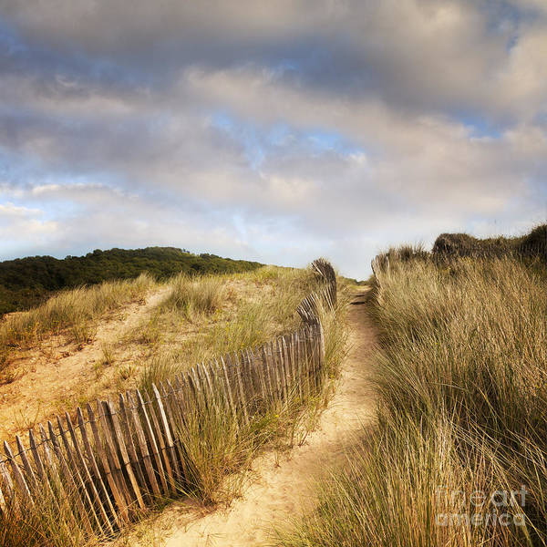 Path Poster featuring the photograph Path Through Dunes by Colin and Linda McKie
