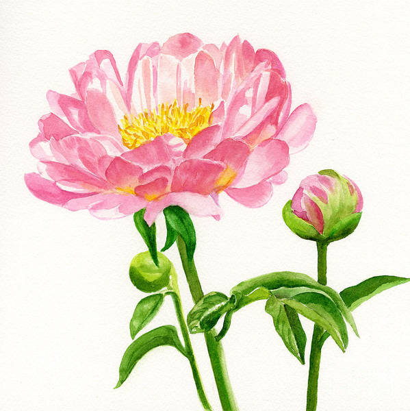 Peach Colored Poster featuring the painting Peach Colored Peony With Buds by Sharon Freeman