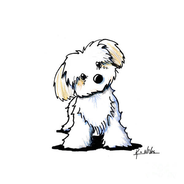 Havanese Poster featuring the drawing Quizzical Havanese by Kim Niles
