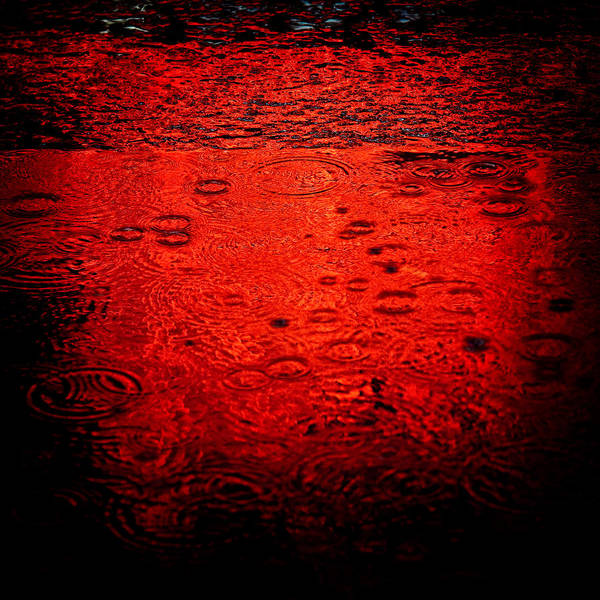 Raindrops Poster featuring the photograph Red Rain by Dave Bowman