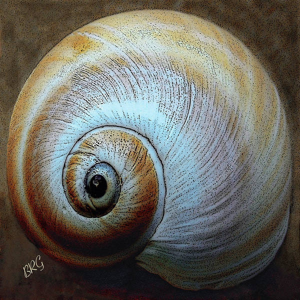 Seashell Poster featuring the photograph Seashells Spectacular No 36 by Ben and Raisa Gertsberg