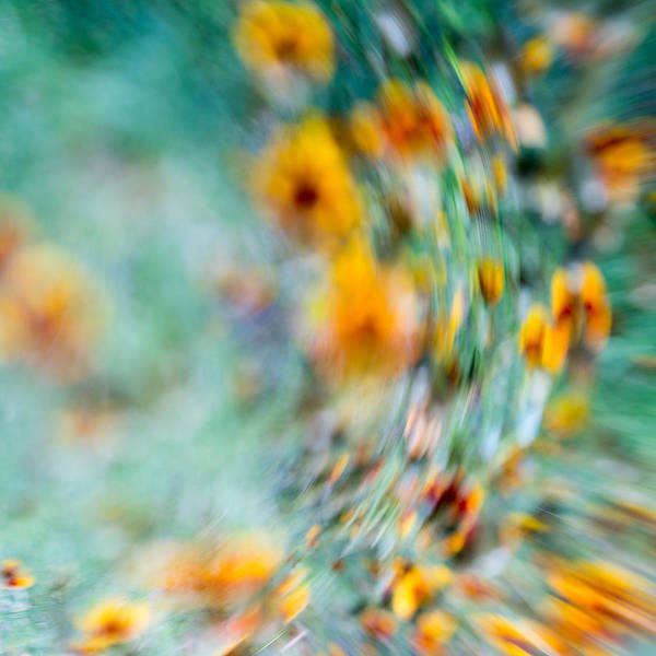 Floral Abstract Poster featuring the photograph Sonic by Darryl Dalton