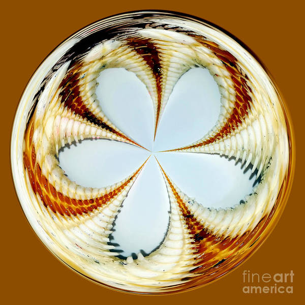 Photography Poster featuring the photograph Starfish To Flower - Orb by Kaye Menner