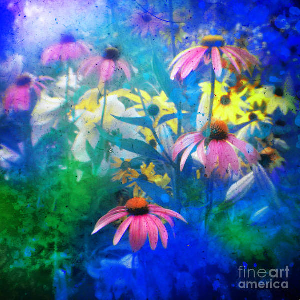 Flowers Poster featuring the photograph Summertime Blues by Gina Signore