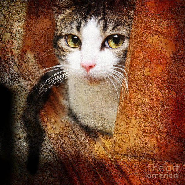 Cat Poster featuring the photograph Sweet Innocence by Andee Design