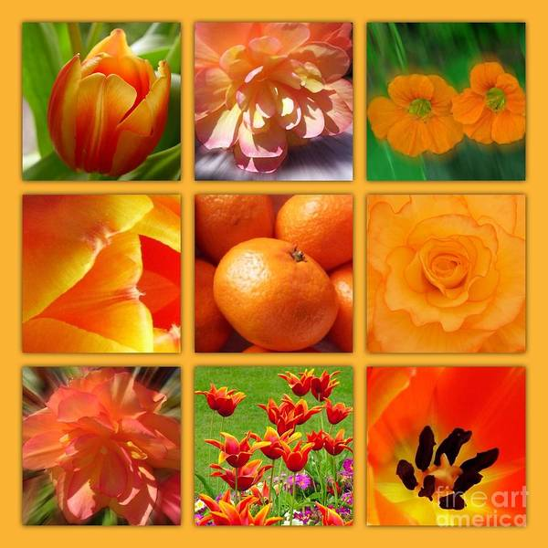 Orange Blossoms Poster featuring the photograph Tangerine Dream Window by Joan-Violet Stretch
