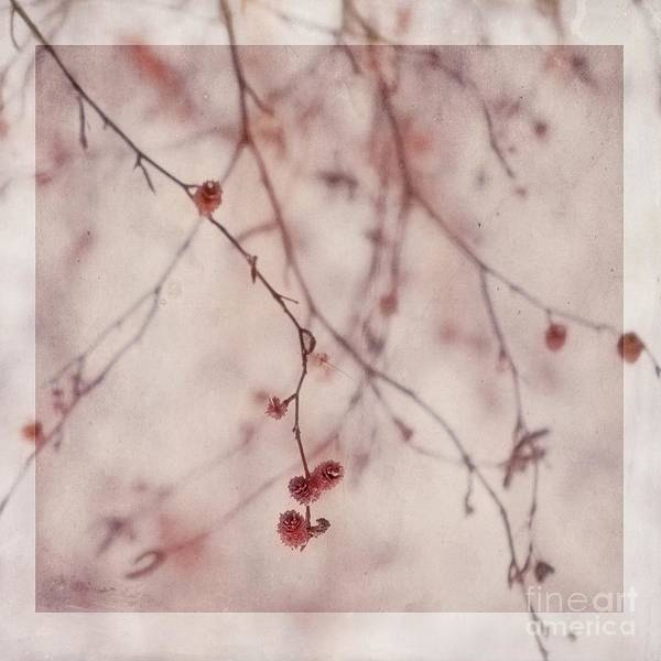 Elder Catkins Poster featuring the photograph The Purr Of Autumn by Priska Wettstein