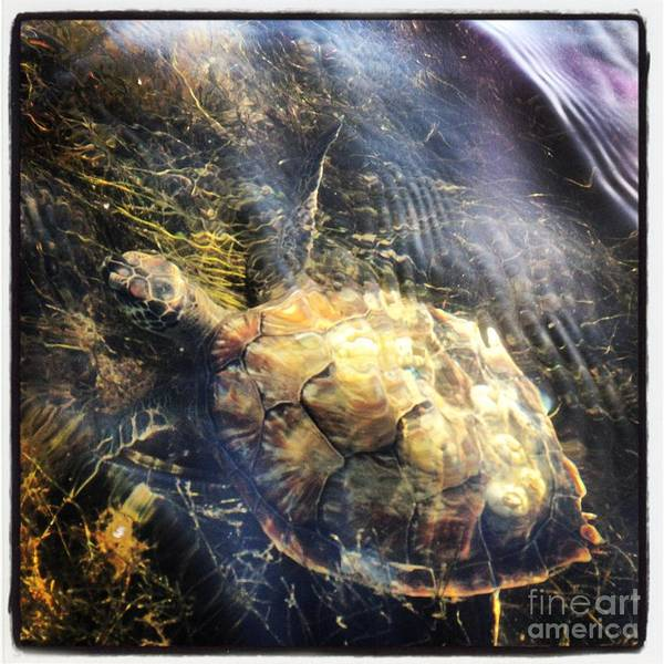 Kayak Poster featuring the photograph Turtle by Nathaniel Murphy