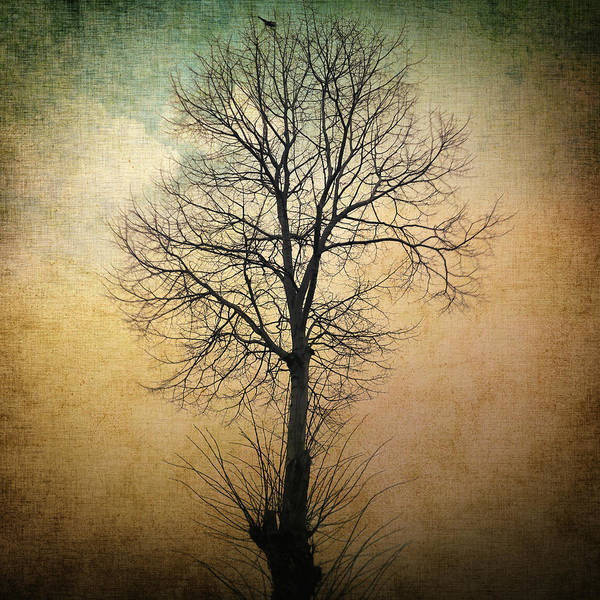 Tree Poster featuring the photograph Waltz Of A Tree by Taylan Apukovska