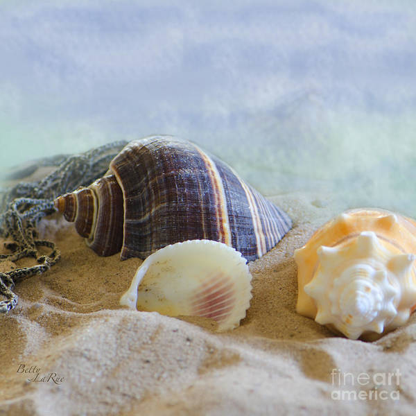 Seashell Poster featuring the photograph Washed Ashore by Betty LaRue