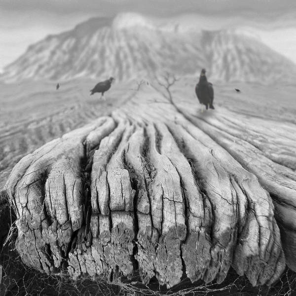 Surrealism Poster featuring the photograph Weathered 3 by Mike McGlothlen