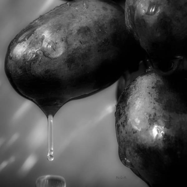 Rain Poster featuring the photograph Wet Grapes Two by Bob Orsillo