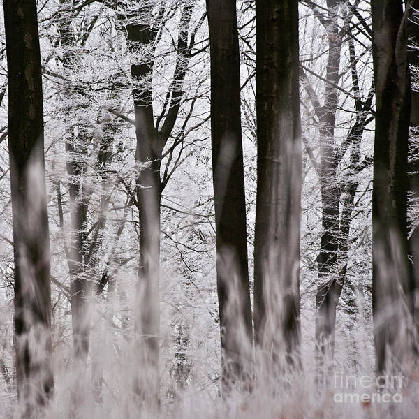 Heiko Poster featuring the photograph Winter Forest 1 by Heiko Koehrer-Wagner