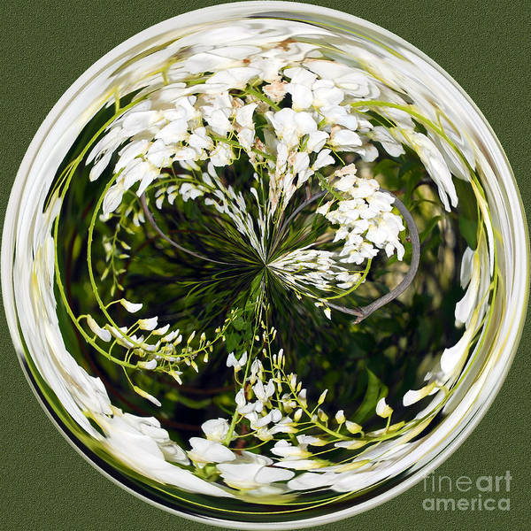 Wisteria Poster featuring the photograph Wisteria Orb by Jeff McJunkin