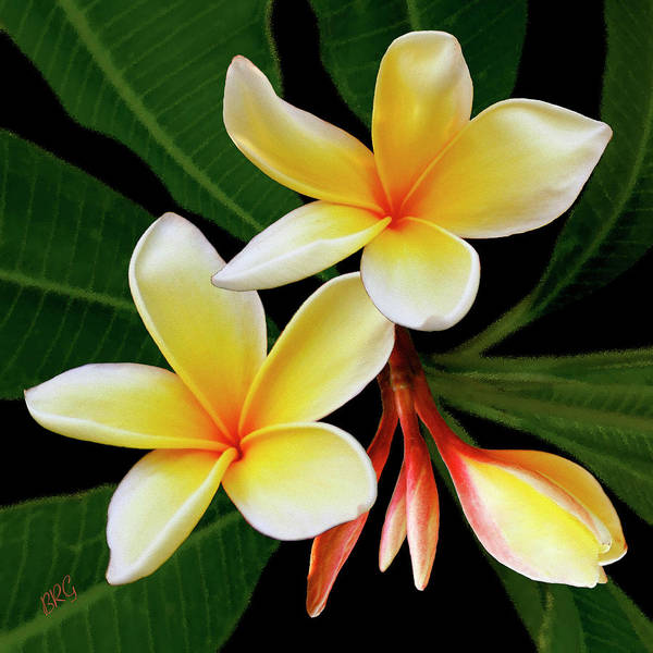 Plumeria Poster featuring the photograph Yellow Plumeria by Ben and Raisa Gertsberg