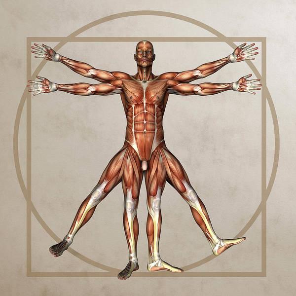 Human Poster featuring the photograph Male Musculature, Artwork by Friedrich Saurer