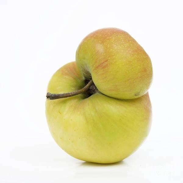Agriculture Poster featuring the photograph Apple by Bernard Jaubert