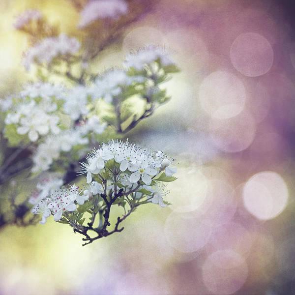Texture Spring Blossom Bokeh Bloom White Green Blue Nature Poster featuring the mixed media Blossom by Joel Olives
