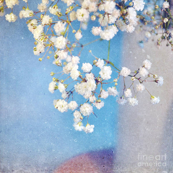 Flowers Poster featuring the photograph Blue Morning by Lyn Randle