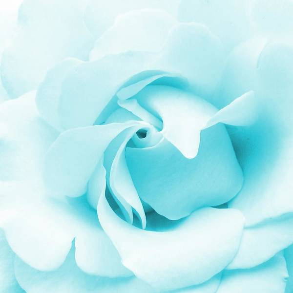 Rose Poster featuring the photograph Blue Rose by Sharon Lisa Clarke