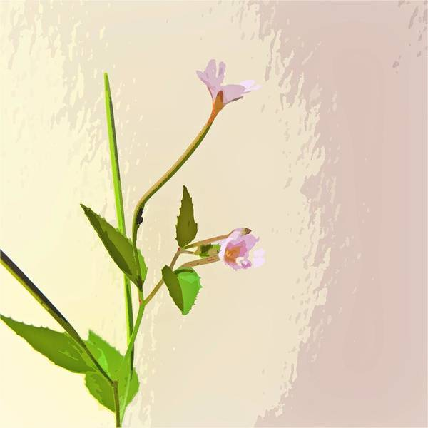 Willow Poster featuring the digital art Broad Leaf Willow Herb by Sharon Lisa Clarke