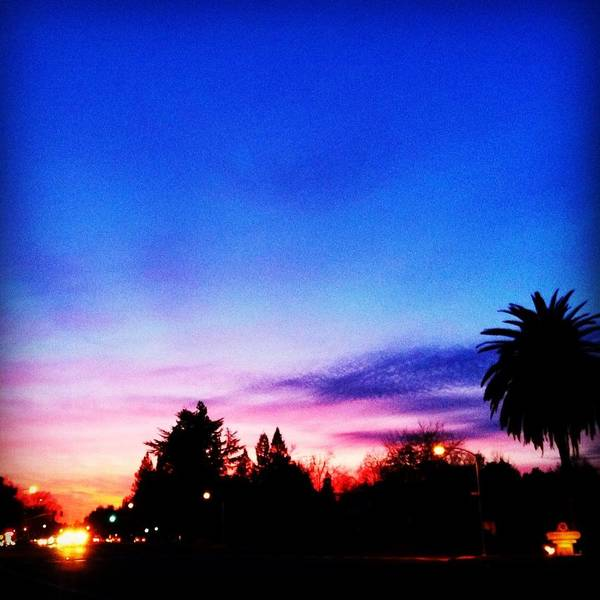 Palm Poster featuring the photograph California Dreaming by Dawn Marie Black