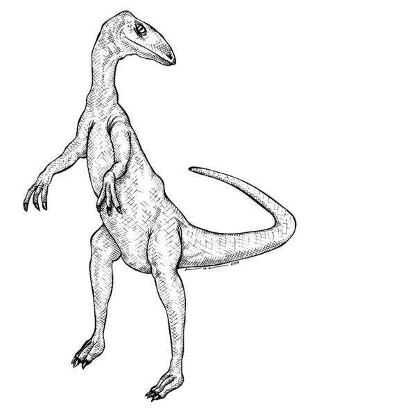Cartoon Poster featuring the drawing Coelophysis - Dinosaur by Karl Addison