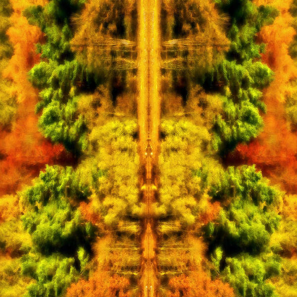 Autumn Poster featuring the photograph Fall Abstract by Meirion Matthias