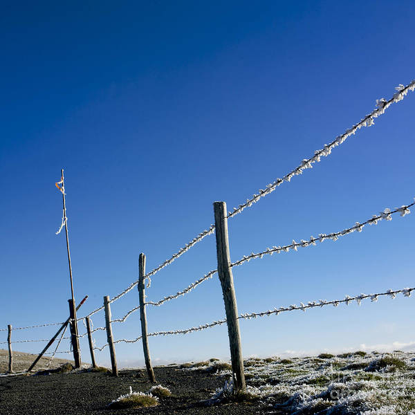Wire Poster featuring the photograph Fence Covered In Hoarfrost In Winter by Bernard Jaubert