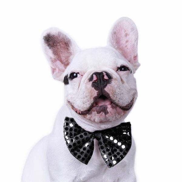 Square Poster featuring the photograph French Bulldog And Bow Tie by Maika 777