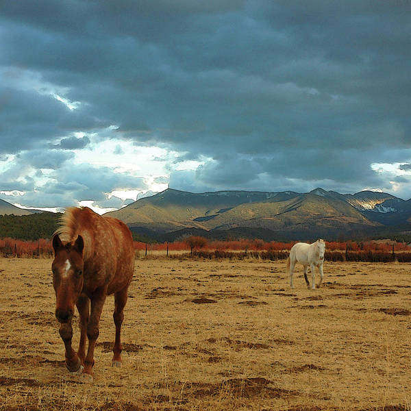 Square Poster featuring the photograph Horses In Winter Landscape Truchas, New Mexico by Mary Hockenbery