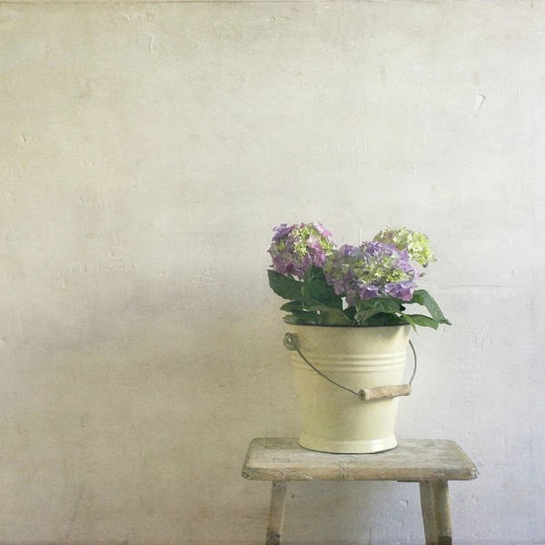 Square Poster featuring the photograph Hydrangea Resting On Stool by Paul Grand Image